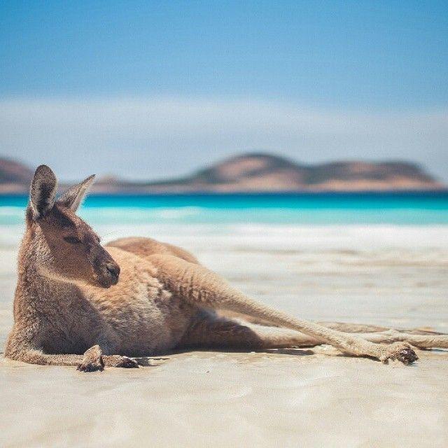 Kangaroo on the beach, Australia | Photography by © Vaust Photography #NatGeoAnmls