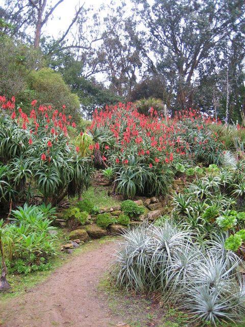 Les 154 Meilleures Images Propos De Les Jardins De Ma