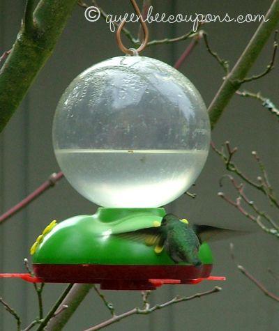 homemade hummingbird food nectar recipe - Homemade Hummingbird Food