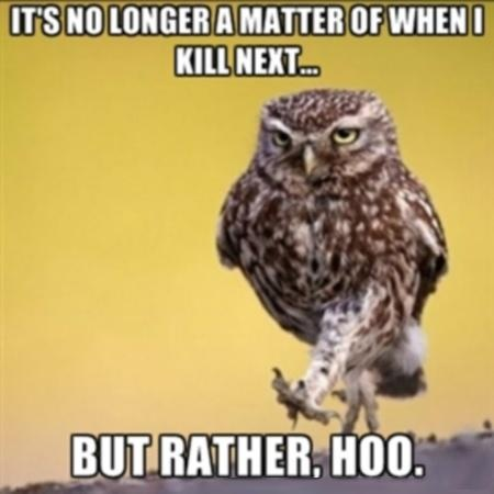 What a hoot. I think owl stay away. | LOL | Pinterest ...