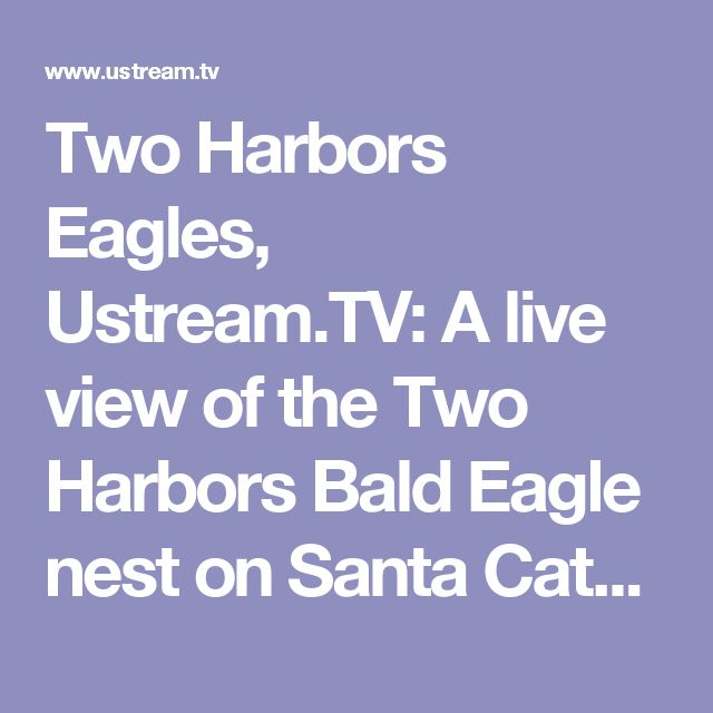 Two Harbors Eagles, Ustream.TV: A live view of the Two Harbors Bald Eagle nest on Santa Catalina Island, California.The nest is active from February throug...