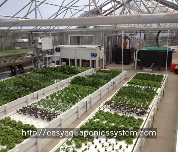 commercial aquaponics systems for sale - aqua garden fish tank.commercial hydroponic greenhouse 3034834626
