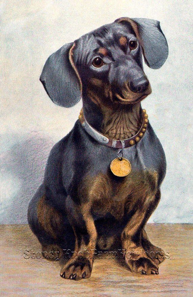 Dachshund Portrait Cross Stitch Pattern Dogs From A German