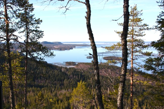 Beautiful Koli