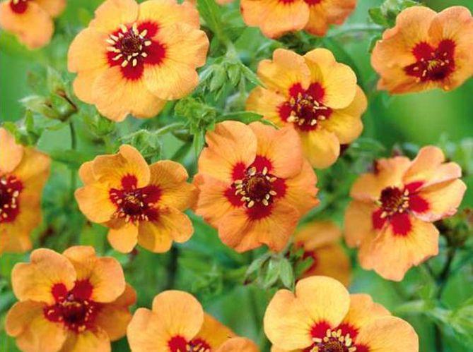 five fleurs pas chères à planter en hiver