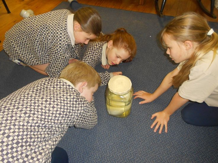 Early Life Science Explored  
