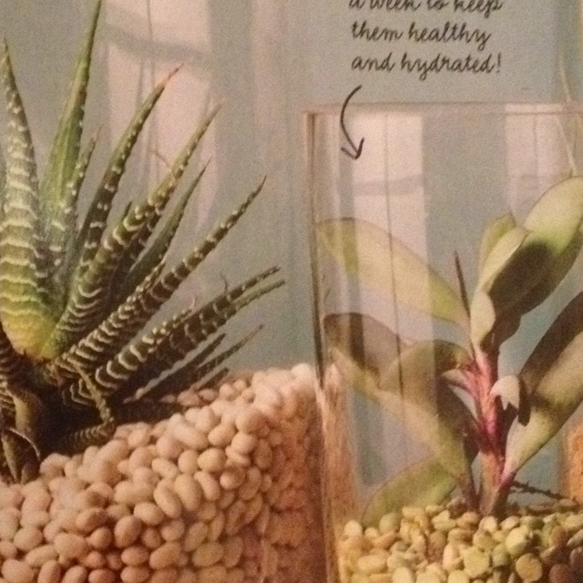 Succulents and dried beans