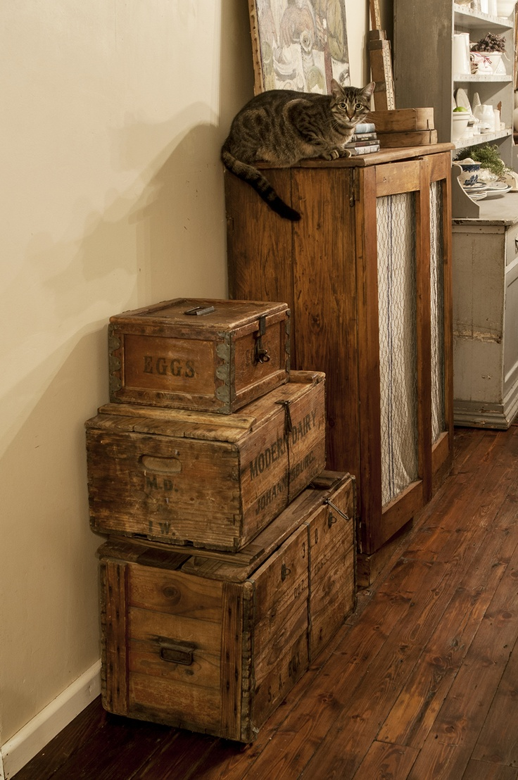 cat, shabby chic, wooden boxes