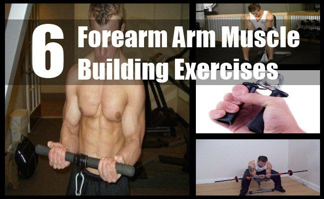 6 Forearm Arm Muscle Building Exercises