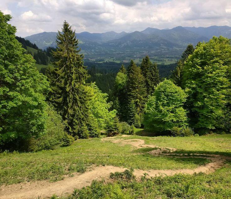 all shades of green  #drogadługajest #wandern #hiking #naszlaku #mountains #green #terazwgórach #allshadesofgreen #instanature #naturephotography #earthcapture #natureknowsbest #bavaria #bayern