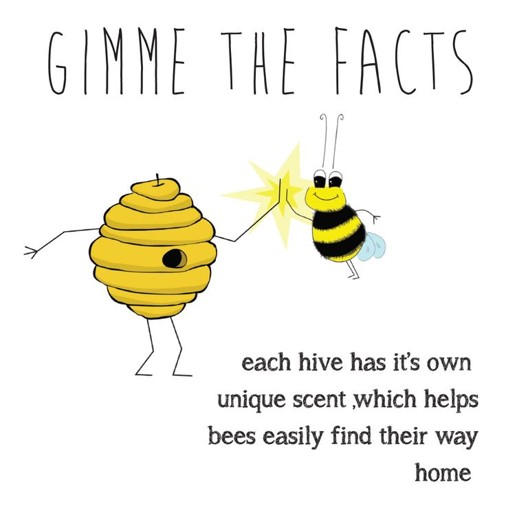 GIMME THE FACTS - Bee Facts.Bees are so important! That's why Buzz Greetings gives $1 to SAVE THE BEES Australia for every purchase made on their Etsy store.  buzzgreetings.etsy.com OR follow bee @buzzgreetings on Instagram. For more about SAVE THE BEES Australia go to beethecure.com.au