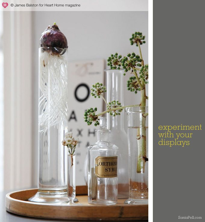 vignetteGardens Ideas, Sania Pelle, Laboratory Flasks, Decor Ideas, Details Work, Glasses Details, Hyacinth Vases, Living Room, Glasses Ideas