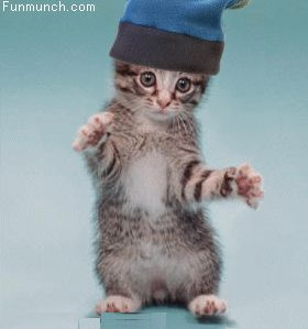 funny gifs | Funny Loveable Animated GIF Animals