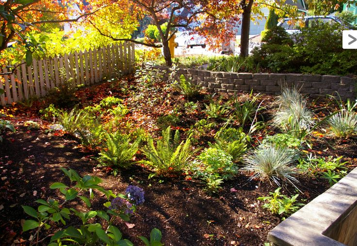 1000 images about rain gardens on pinterest rain garden for Rain garden design