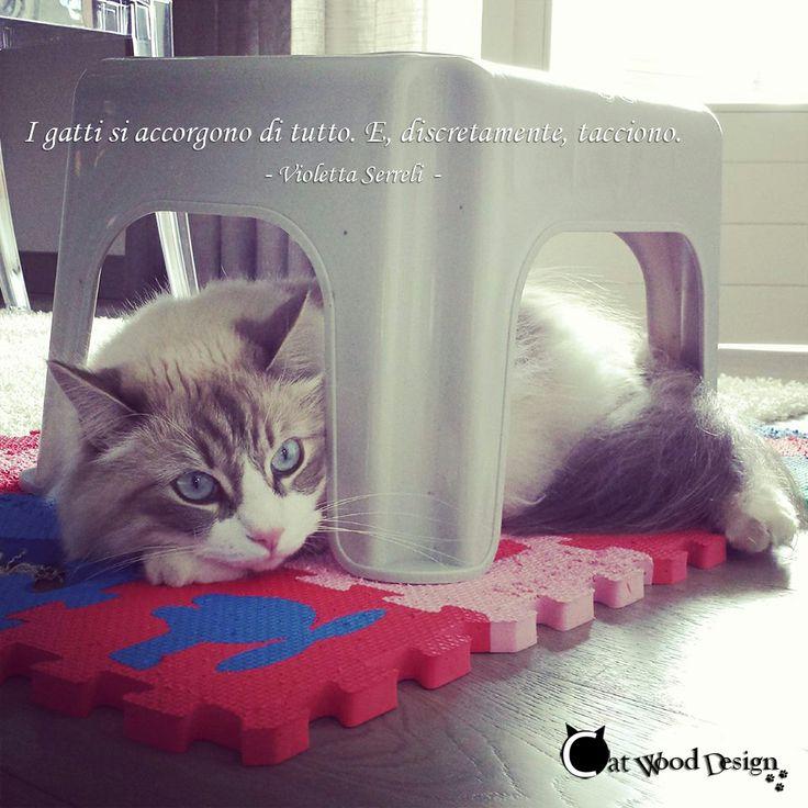 I gatti si accorgono di tutto. E, discretamente, tacciono #aforismi #gatti