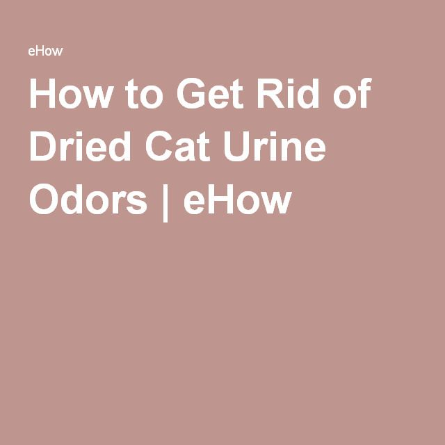 How to Get Rid of Dried Cat Urine Odors | eHow