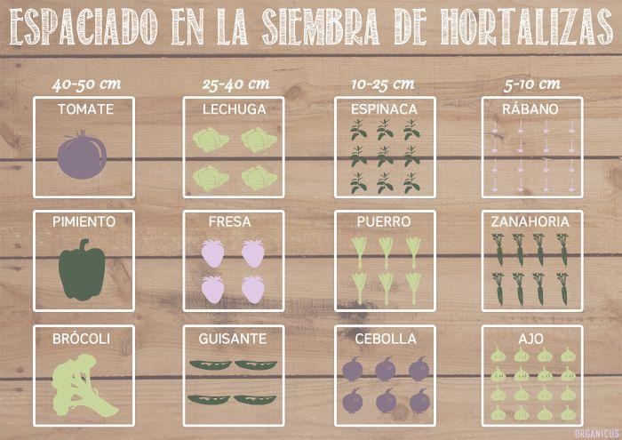 Espaciado en la siembra de hortalizas. Infografía de http://organicus-blog.blogspot.com.es/