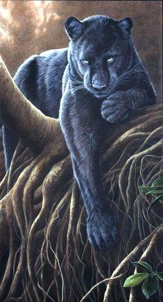 Black Knight - Panther, UK Wildlife Artist Jeremy Paul