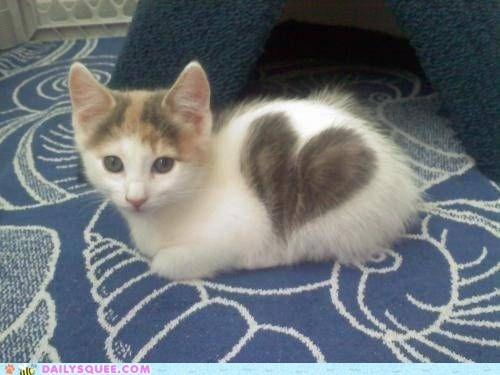 This kitty has much love for you. All of you! And he's not afraid to show it. It's like a kitty Care Bear!