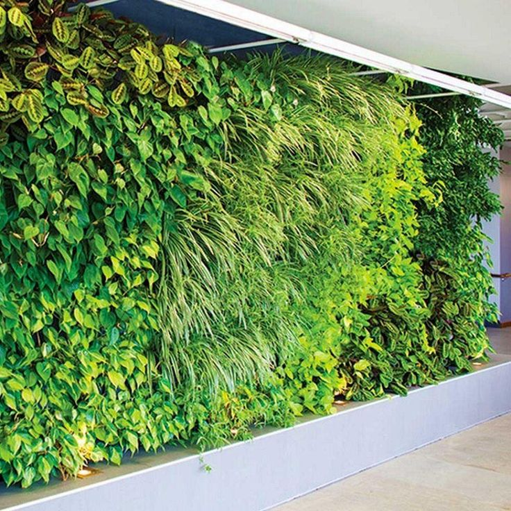 Living Wall Planter 56 best woolly walls images on pinterest | vertical gardens