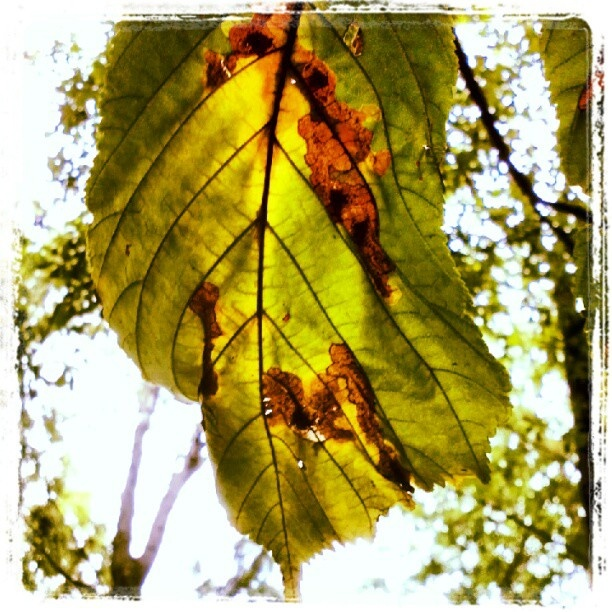 "@kelex_2x's photo: ""Az ősz színei - part 2. - #autumn #macro #mobilephoto #wood #tree #leaf #colors"""