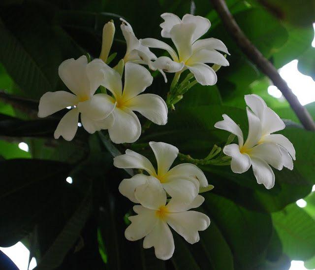 My pre-monsoon scented garden