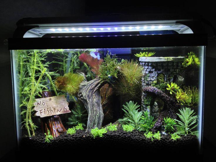 2 5 gallon heavily planted betta aquarium 145576 fish for Multiple betta fish tank