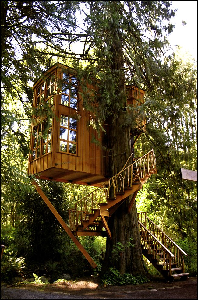 interview with pete nelson of animal planets treehouse masters land8