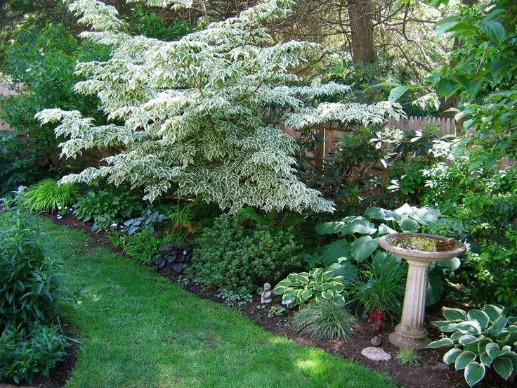 pulmonaria images  pinterest shade garden