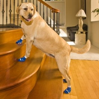 Non-slip socks for dogs are great for dogs that slip on the floor, like senior dogs or dogs with arthritis or hip dysplasia. They are also ideal for protecting a dog's injured foot.