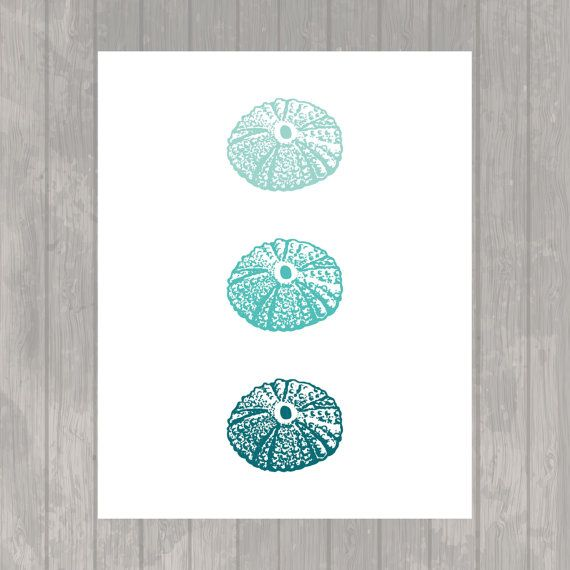 Three Sea Urchins in Teal  Sealife  Wall Art by paper4download