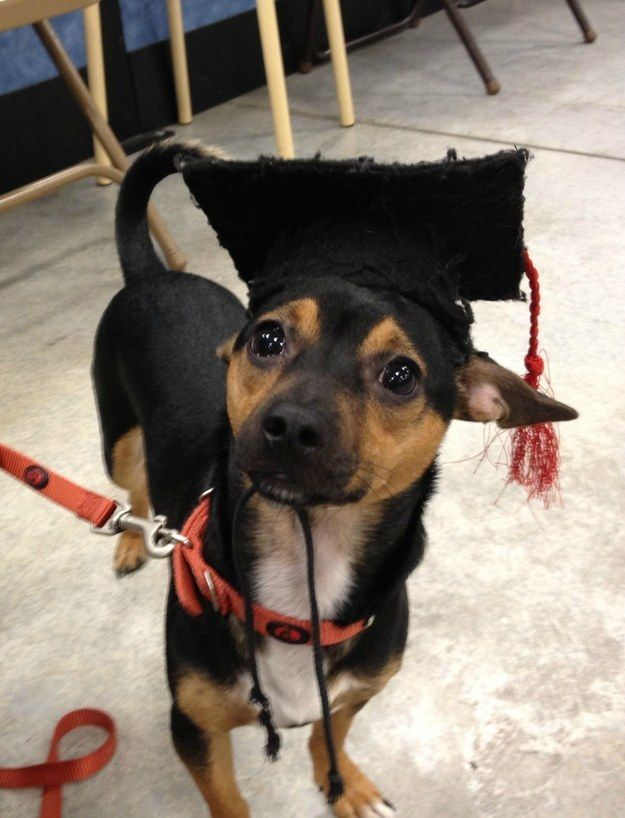 """""""You mean to tell me puppy kindergarten is only the FIRST step??"""" 