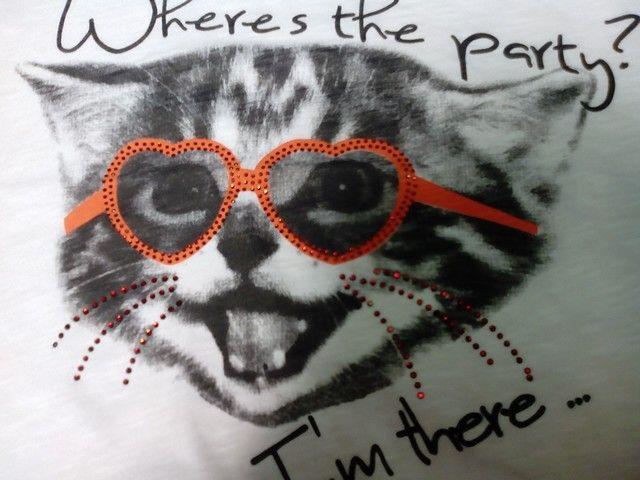 Cat have glasses