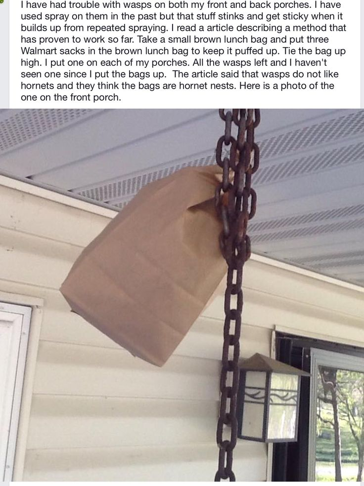 How to keep wasps away from house