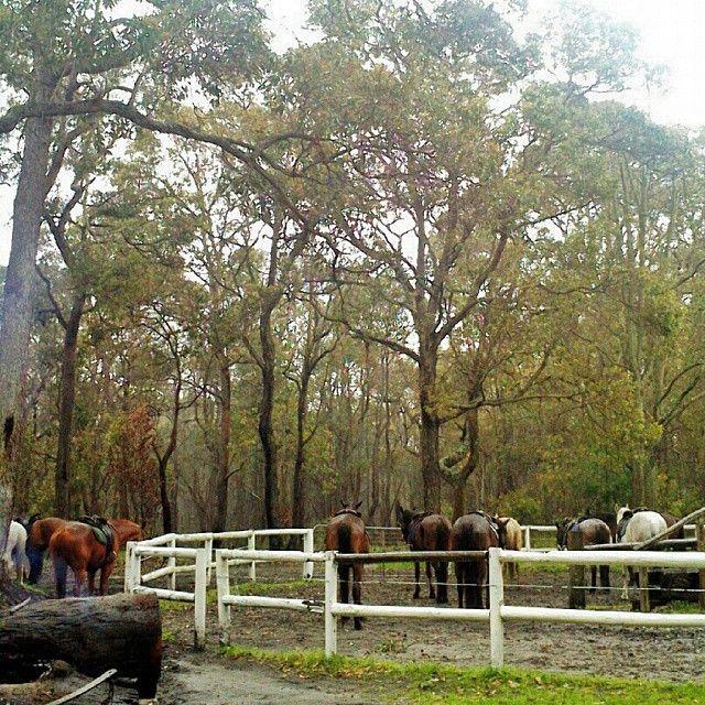 Horse riding in Jesters Flat Equestrian, Margaret River, Australia.