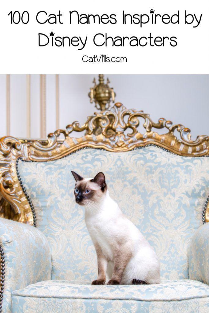 100 Beautiful Disney Inspired Cat Names Catvills In 2020 Cat Names The Cat Returns Fancy Cats