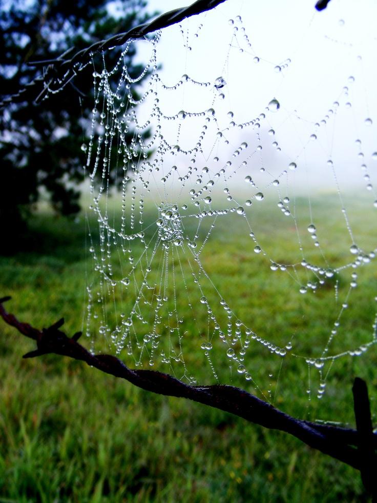 Little Spider Web 2