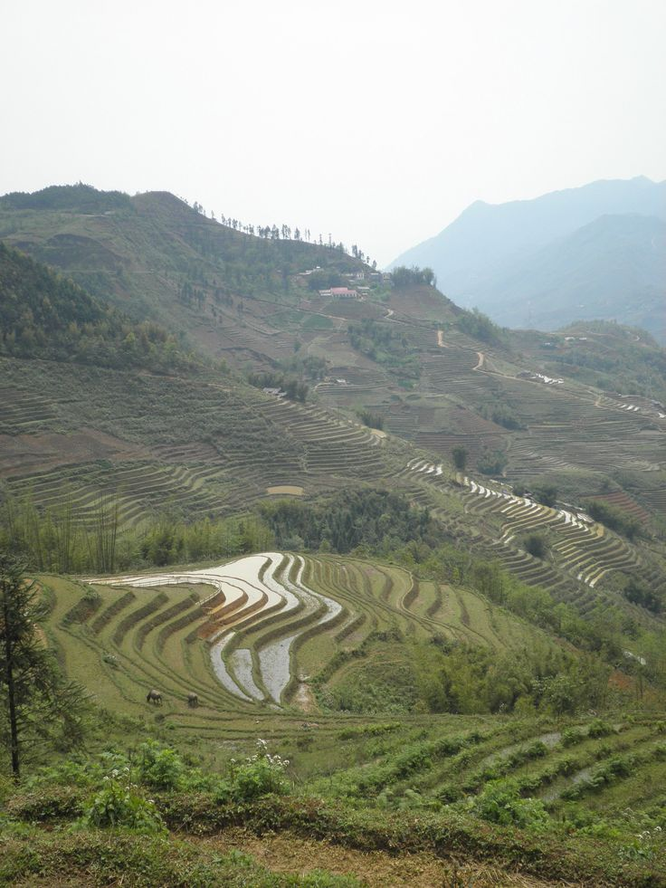 Hike in the rice fields of Sapa, Vietnam (picture: Christoffer Volf)