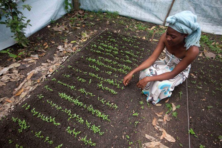Marie cuida de los cultivos en su jardín en Haití.