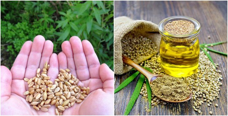 Hemp seed oil is considered to be the most nutritionally balanced oil found in nature, and it can be used in so many ways to improve your health!