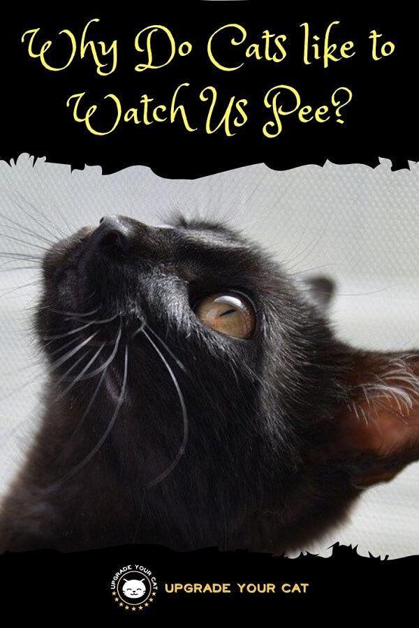 c1d87e46eaa915ca90e433e3e2f77ad1 - How Do You Get Your Cat To Like You
