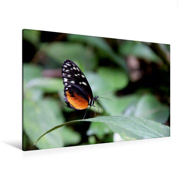 Tiger-Passionsblumenfalter (Premium Foto-Leinwand 45x30 cm, 50x75 cm, 90x60 cm, 120x80 cm)