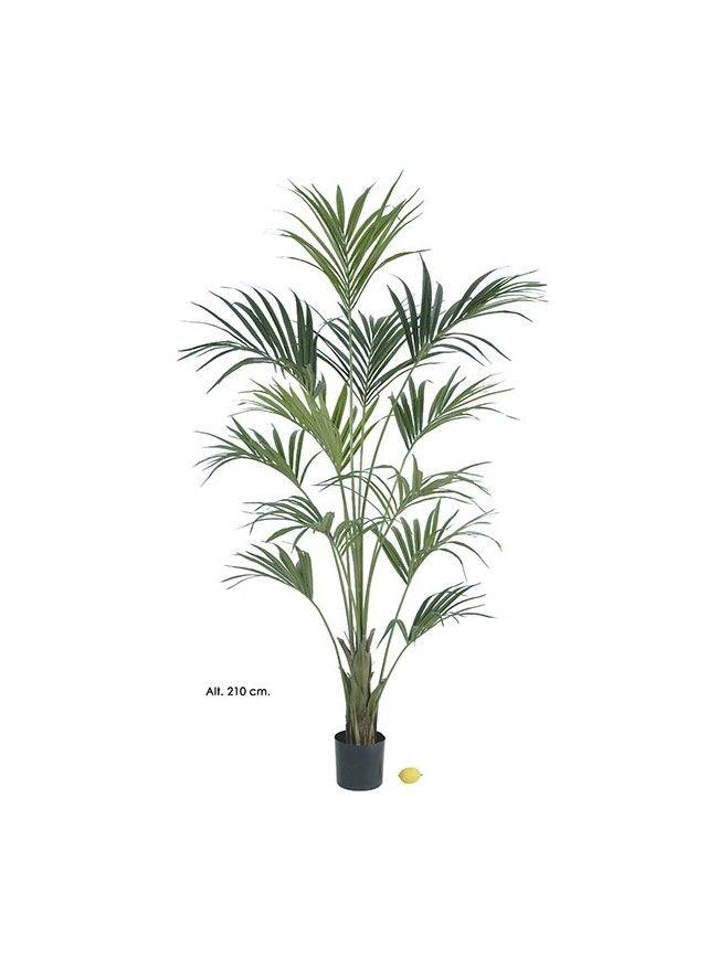 Las 35 mejores im genes sobre arboles palmeras - Palmeras de plastico ...