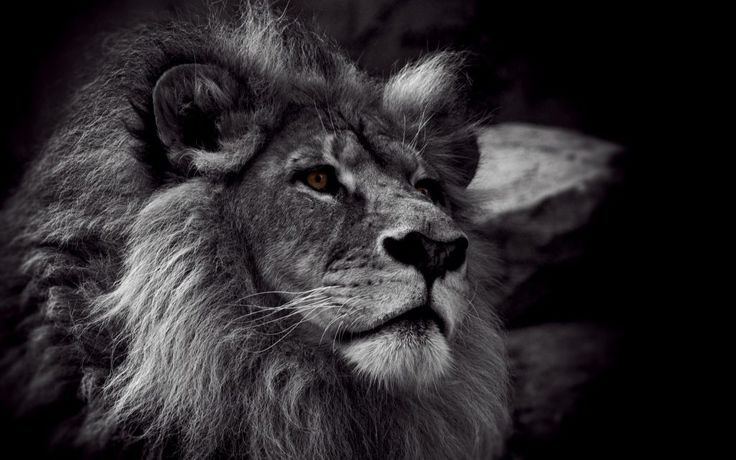 iPhone X Wallpaper Screensaver Background 055 Lion Ultra ...
