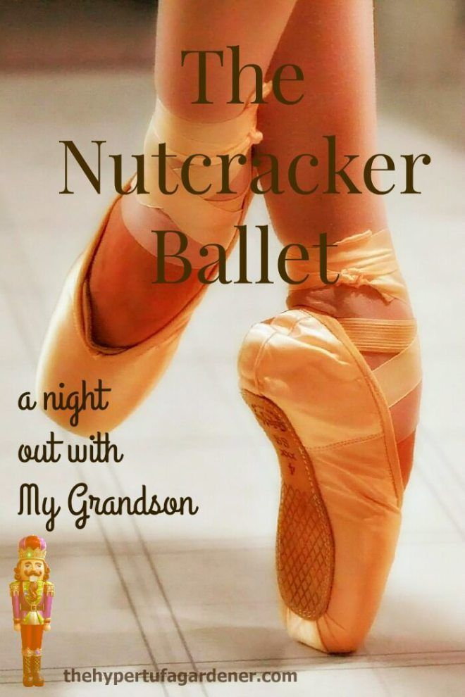 We've Got Nutcracker Tickets for Saturday! -The Hypertufa Gardener