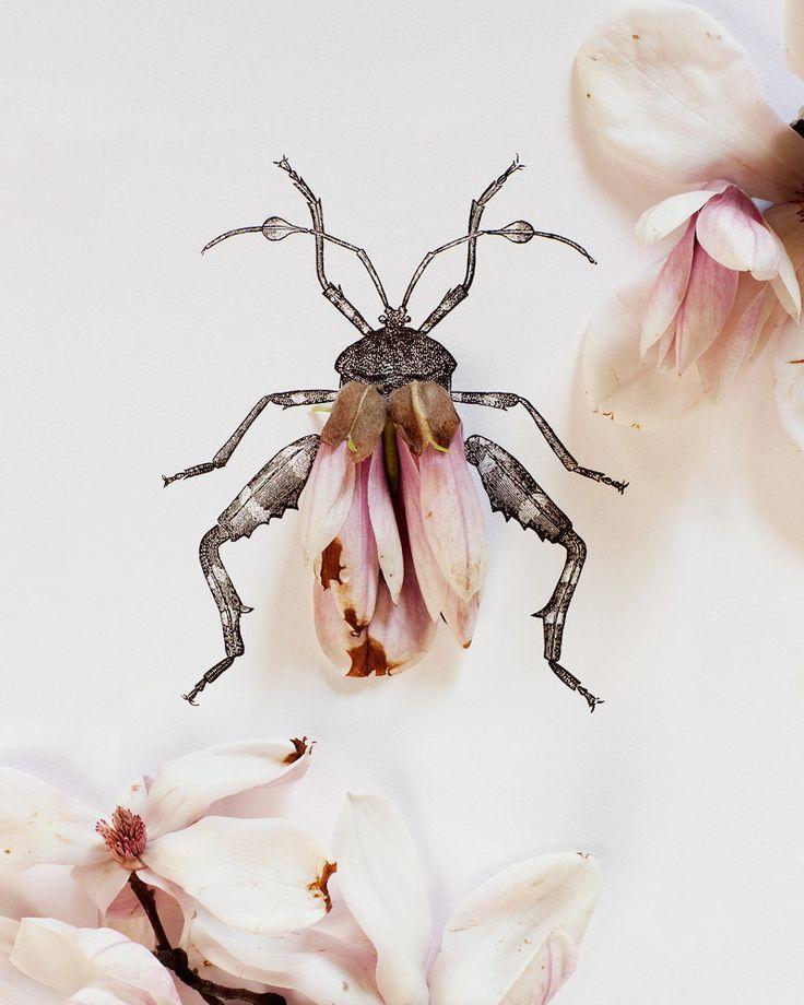 Kari Herer | Magnolia bug.