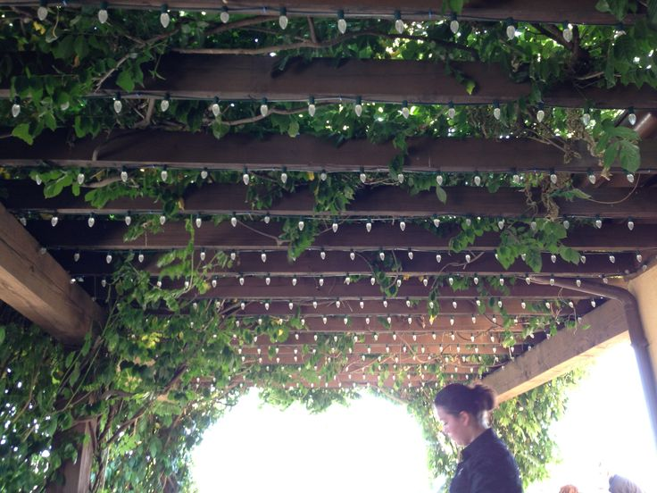 Lights and vines on pergola pergolas pinterest vines pergolas and lights - Pergola climbing plants under natures roof ...