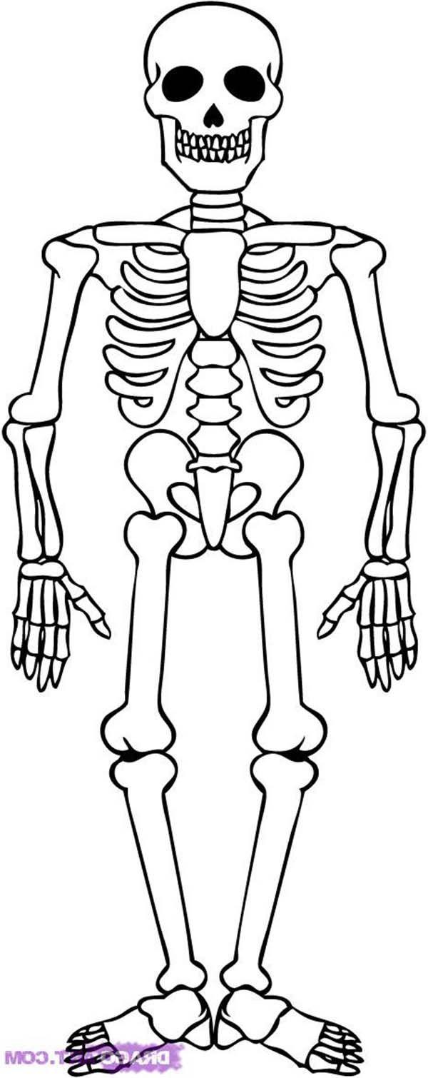 Awesome Skeleton Drawing Coloring Page Kids Play Color Skeleton Drawing Easy Skeleton Drawings Skeleton Art Drawing
