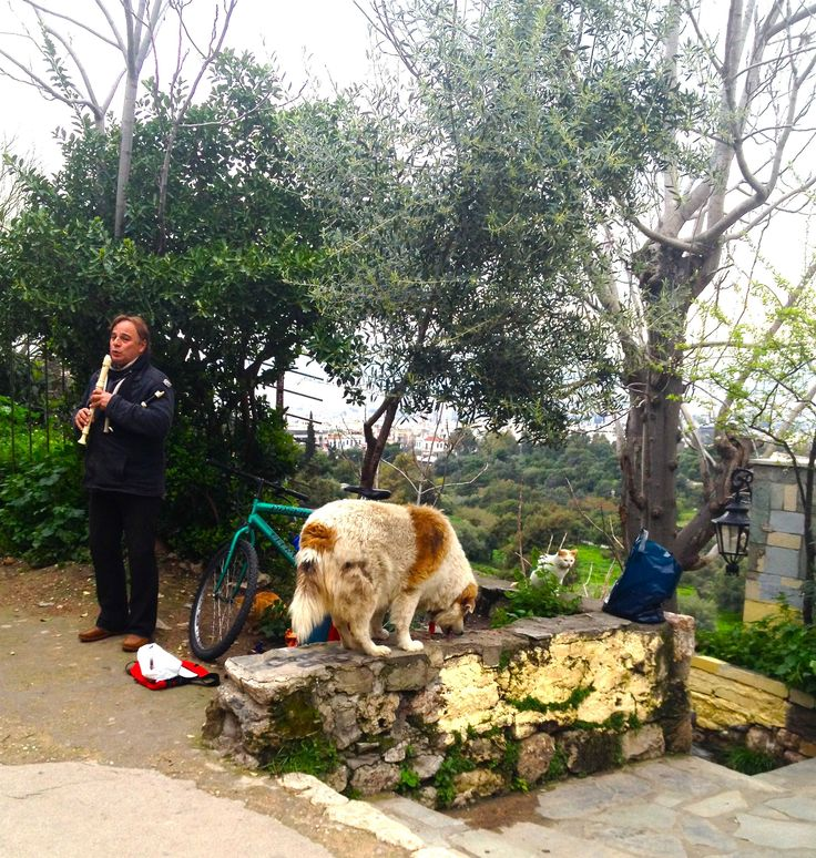 This man feeds the neighbourhood cats, which gather as his loyal daily audience when he plays the recorder (accompanying to a CD) to passers by. Acropolis, Athens. Photo by A. Amvrazi