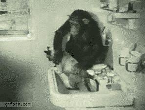 Chimp Washing Cat